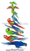 Macaw Stack by Foxfeather248