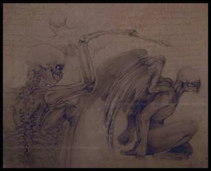 angel anatomy by akreon