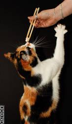 sushi cat by akreon