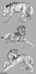 sketch commissions - canines by akreon