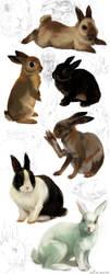 rabbit studies by akreon