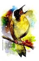 bird watercolour by rogercruz