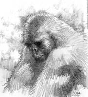 TNTema-Primates by rogercruz