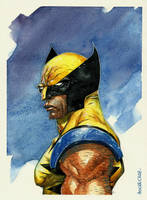 Watercolor - Wolverine by rogercruz