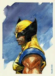 Watercolor - Wolverine by rogercruz