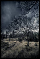 Sky roots by zardo