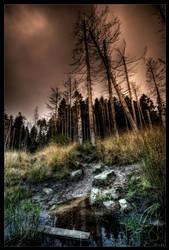 Dark swamp by zardo