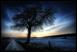 Tree of light by zardo