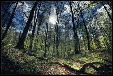 Hidden paradise by zardo
