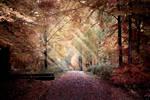 Golden leaves by zardo