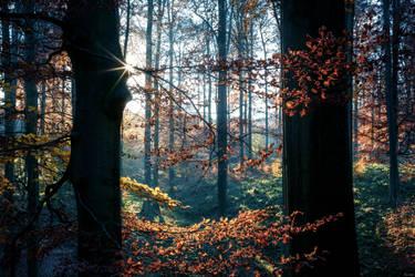Hidden starlight by zardo
