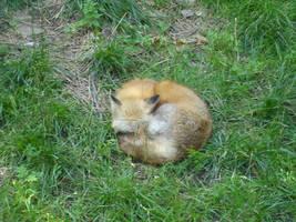 fox by xxbezaubern