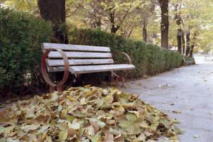 fallen leaves by monib