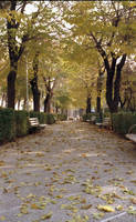 the walk by monib