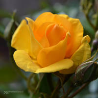 shades of elegance by akthuro