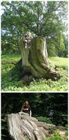 tree trunk throne by ZombiDJ