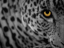 White Leopard by AkiraNinja