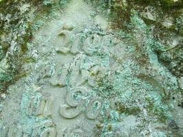 Lichen Texture2 by ValerianaSTOCK