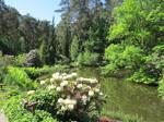 ValerianaSTOCK Lake with Rhododendrons by ValerianaSTOCK