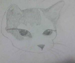 Cat by huskiezlover