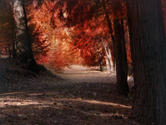 Red Trees by BenGrunder