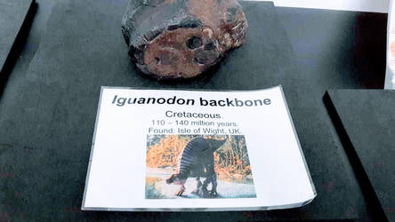 Dinovember Day 5: Iguanodon Backbone by NestieBot