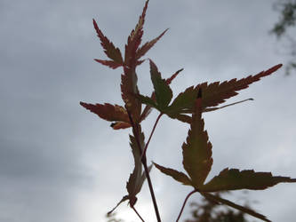 Autumn Rising by Raindork