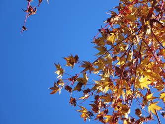 Autumn by Raindork