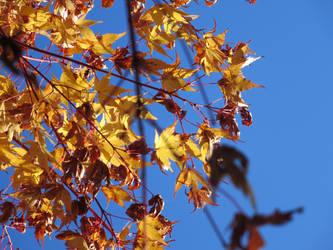 Just Leaf Me Be by Raindork
