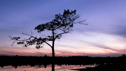Marsh Tree by cluster5020