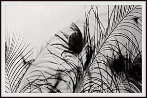 Shallow (focus) by missbritneyrae