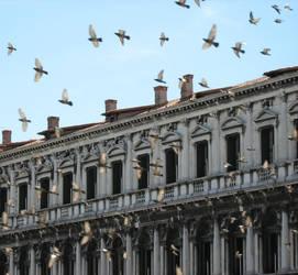 san marco flying by rooftopwalker