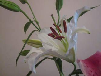 White Flower by HugoMndz