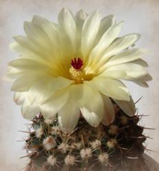 Cactus by Crait