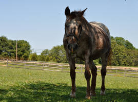 STOCK Sara III by EquusPhoto
