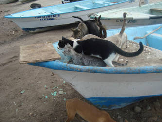 20 cats, 2 dogs and a fisherman by ginajaja
