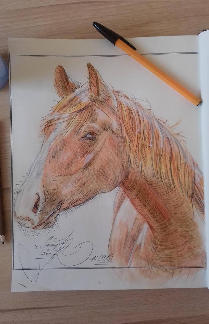 Horse (sketchbook, watercolor pencils + black pen) by basgroll
