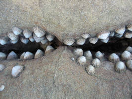 Shell jagged mouth by NaturalBornCamper