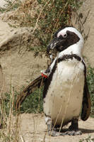 Penguin by Grumzz
