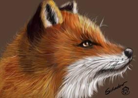 fox by AwakenSchadow