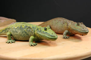 Eryops megacthalus pair by stablefly