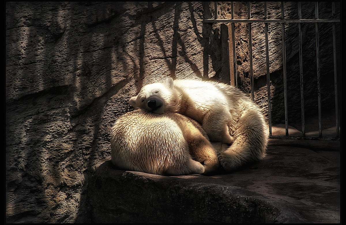 A nap for Two - Fake HDR by Riot23