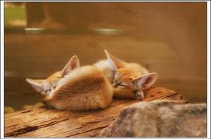 Fennec Fox by Riot23