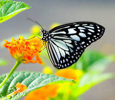 butterfly effect by blacksheepwall