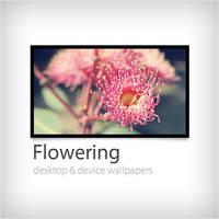 Flowering by duckfarm