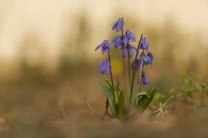 Blue Flowers by homerlein