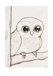 Little chubby owl by BoomstickGirl