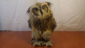 Owly, the Owl by RaptorsDen