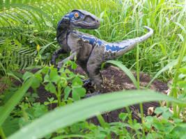 Blue, the velociraptor by RaptorsDen