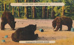 Vintage New England - Bears in Jackman, Maine by Yesterdays-Paper
